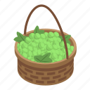 basket, cartoon, floral, grapes, green, isometric, woman