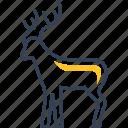 animal, deer, forest, winter