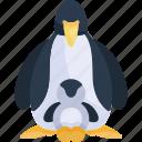 bird, animal, animals, wild life, penguin, wildlife