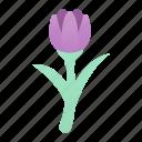 blossom, botanical, flower, nature, petals, tulip icon