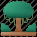 big, tree, forest, bush, ecology, botanical, yard