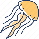 jellyfish, fish, sea, ocean, sea animal, sea life, aquatic animal