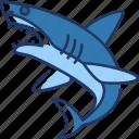 shark, fish, animal, sea, ocean, whale, fin