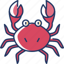 crab, animal, sea, ocean, sea life, crustacean, beach