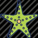 starfish, sea, animal, ocean, fish, beach, sea creature