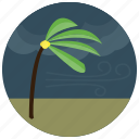 forecast, palm, tree, weather icon