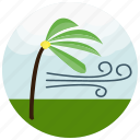 forecast, palm, strong, tree, weather, wind icon