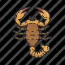 constellation, horoscope, religion, scorpio, scorpion, zodiac