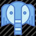 elephant, mammal, wildlife, zoo