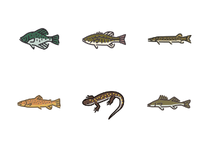 Freshwater life in colour