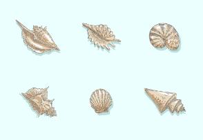 Seashell hand drawn