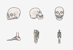 Skeletal system - Colored