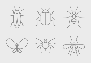 Small Insects