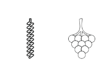 Wine - Outline